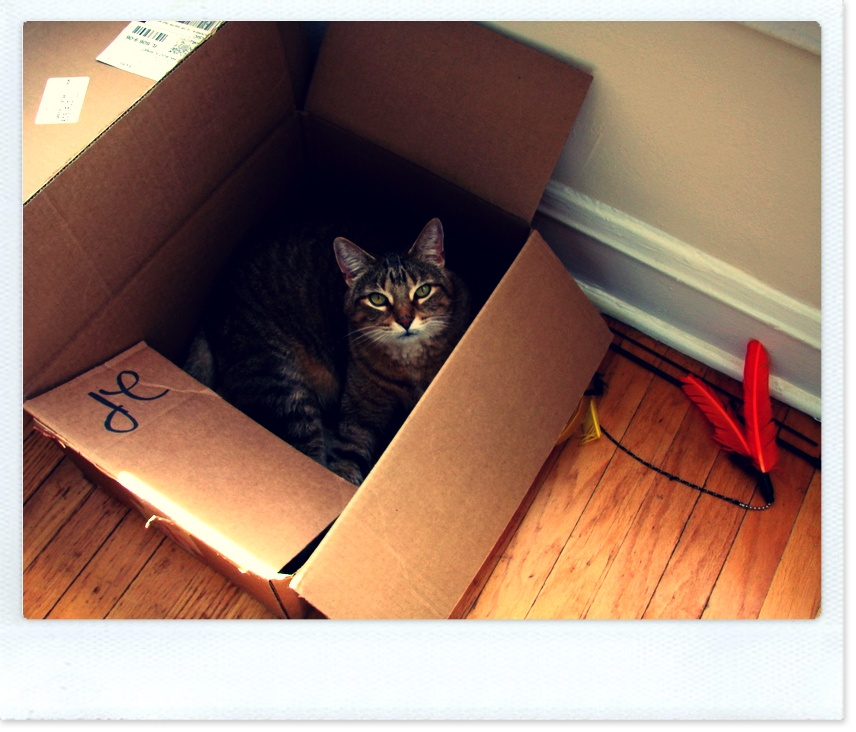 moving-cat-box